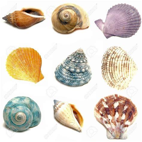 Seashell L by Seashells Sur Topsy One