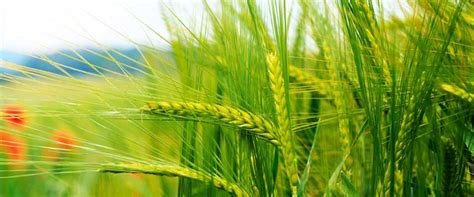 advantage of liquid bio fertilizers u p agro ltd