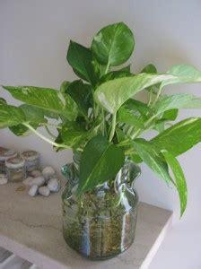 vasi per idrocoltura vendita idrocoltura un modo semplice per coltivare le piante in