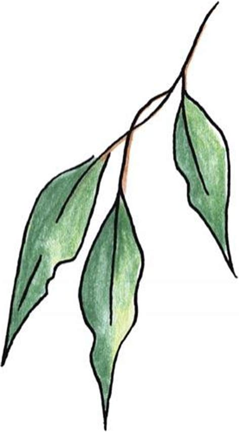 printable gum leaves gum leaf template clipart best