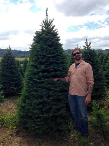 are papa noel trees good how to select a tree papa noel trees