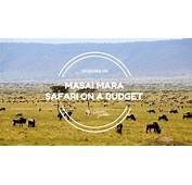 Masai Mara Safari On A Budget  Junkie