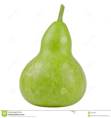 Green Gourd L by Green Gourd Royalty Free Stock Photography Image 20264467