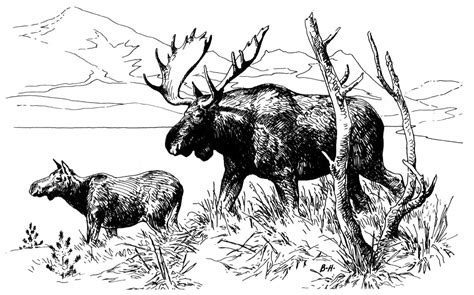 coloring pages alaska animals free moose coloring pages