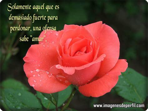 bonitas de rosas rojas con frases de amor imagenes de amor facebook rosas con frases auto design tech