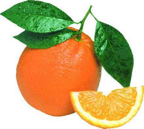 come si cucina l anatra all arancia l anatra all arancia 232 una ricetta economica chefsaga