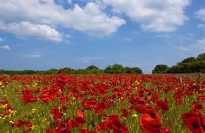 Red Duvet Cover Full A Field Full Of Red Flowers Photograph By John Short