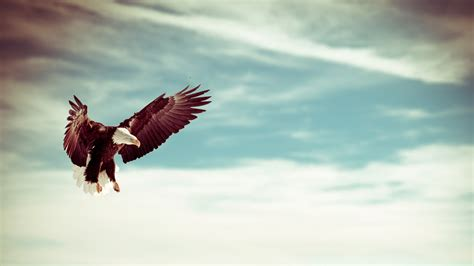 eagle tattoo hd wallpaper eagles wallpapers best wallpapers