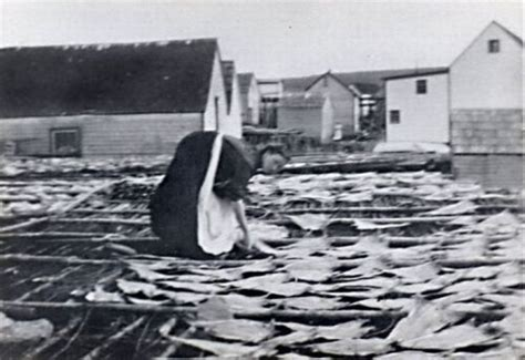 Laying codfish on the flake to dry, Winterton, Newfoundland, [ca.1900]   Coastal Women Image Gallery