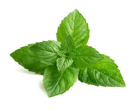 13+ Best HD Mint Leaves Wallpapers Mint Leaves Wallpaper