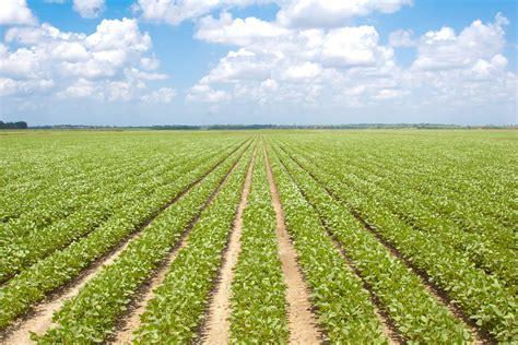In Crop by Msu Farm Bill Simulation Gives Soybean Crop Advice