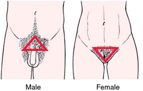 pubic hair styles for men mens pubic hairstyles worldbizdata com