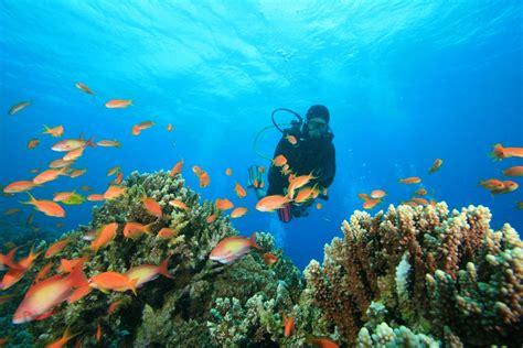 le de plongee offrez vous une semaine de plong 233 e sous marine envie d envies sofinco et le figaro
