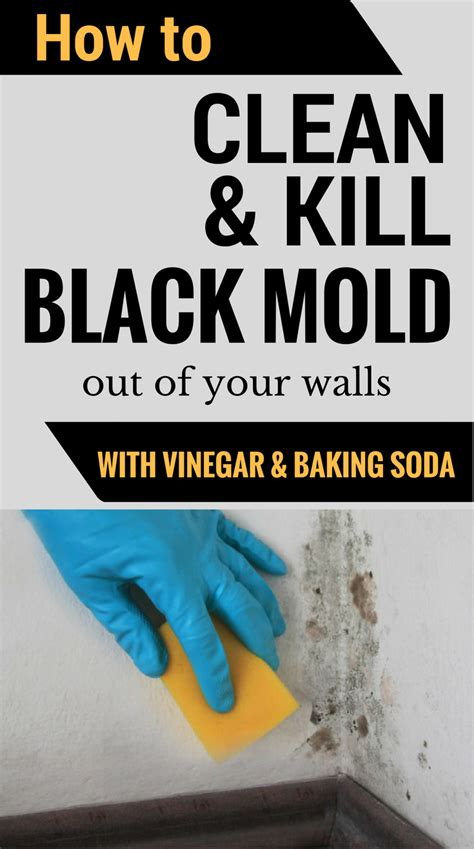 how to clean kill mold off your walls with vinegar and