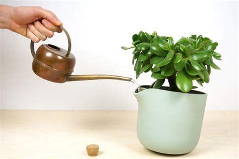 self watering plants self watering flowerpot slightly tilts when the plant
