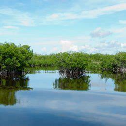 everglades airboat tours near sarasota everglades national park florida die weltklasse s 252 mpfe