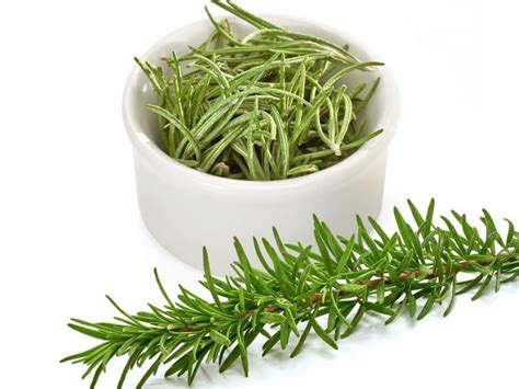 Daun Kari By Wheat Grass Seed 11 impressive benefits of rosemary organic facts