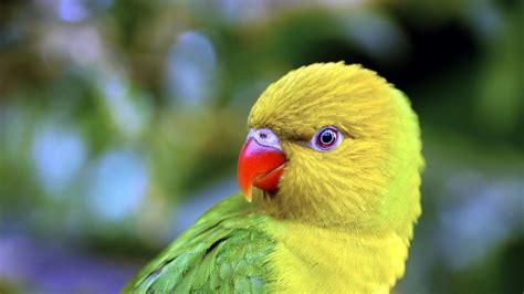 bird with colored beak parrot beak color bird diferent photos