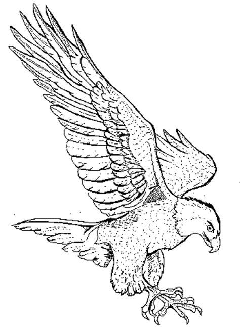coloring pages birds of prey bird of prey coloring download bird of prey coloring