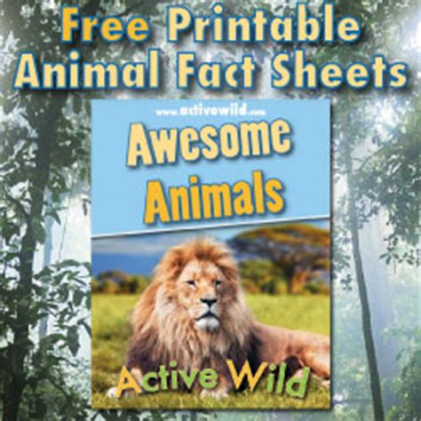 printable animal fact sheets rainforest animals list with pictures facts information