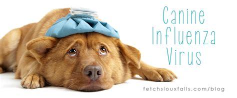 puppy flu flu breeds picture