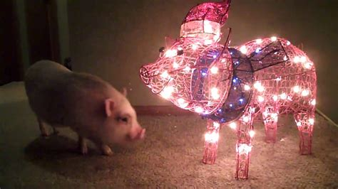 christmas light up pig ideas christmas decorating