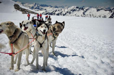 sled dogs glacier sledding alaska icefield expeditions visual venturing