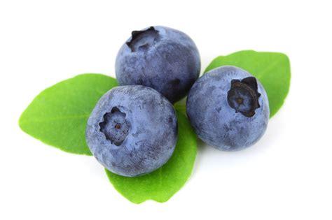 blueberry fruit photo 34733311 fanpop