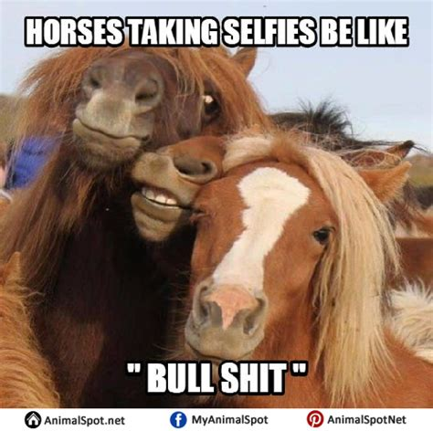 Meme Horse - funny horse face meme www imgkid com the image kid has it