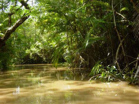 amazon rainforest unique facts about south central america the amazon