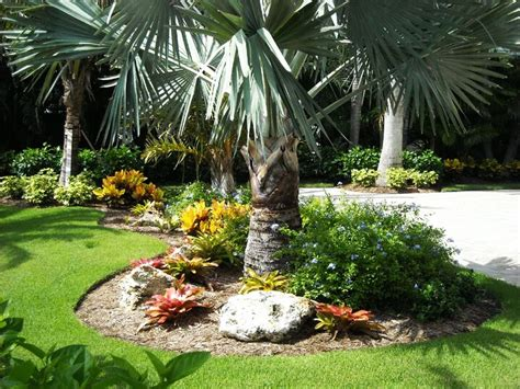 palm tree landscaping design ideas homefurniture org