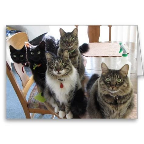 cards cat 17 best images about cat birthday cards on
