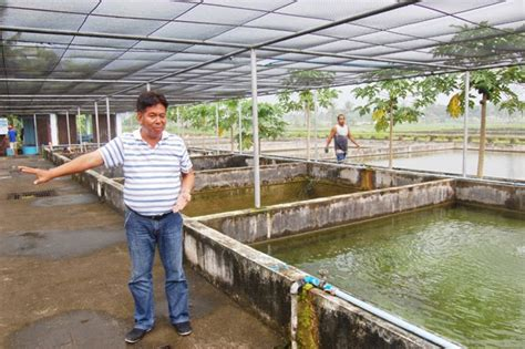 how to raise tilapia in the backyard nature and farming how to raise tilapia in the backyard