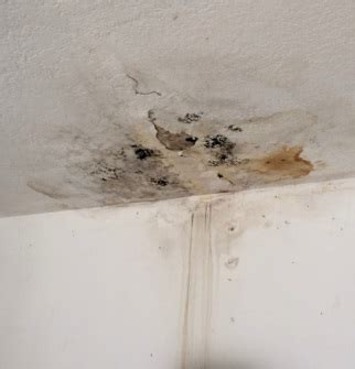 How To Stop Water Leakage From Ceiling by Ceiling Water Leak What To Do Preventing Mold
