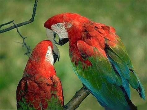 Multi Bird Pakan Burung Parrot wallpaper burung eksotis indonesia 2