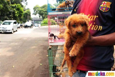 Bola Karet Mainan Anjing Feeding foto lucunya anak anjing ras di tepi jalan latuharhari merdeka