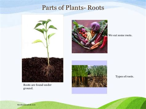 What Type Of Tree Is Used To Make Paper - environmental science evs plants and trees class i