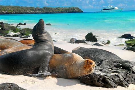 imagenes animales galapagos turismo a las islas gal 225 pagos creci 243 4 en 2015 vistazo