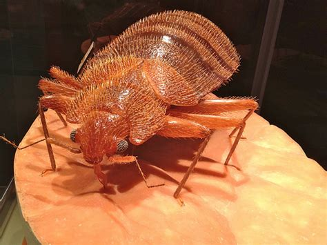 big bed bugs large bed bug model explore lynn friedman s photos on