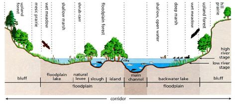 Cross Section Of A River by Cross Section Of A River Corridor The Components Of