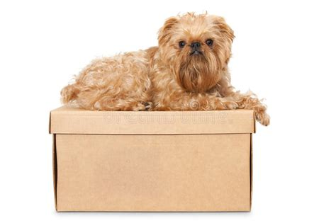 Boxes For Dogs Picture More - on cardboard box stock photos image 26649383