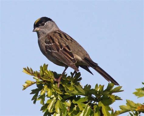 many california bird species host lyme disease bacteria