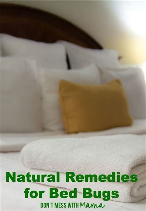 natural remedies for bed bugs 334 best images about good tips for everyday life on