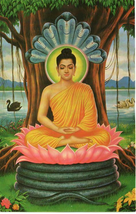 beverly buddha the true story of an enlightened rogue books buddhism ferrebeekeeper
