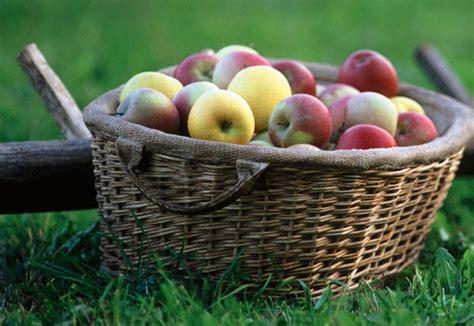 cucinare le mele amate cucinare le mele questo corso e per voi ilmirino it
