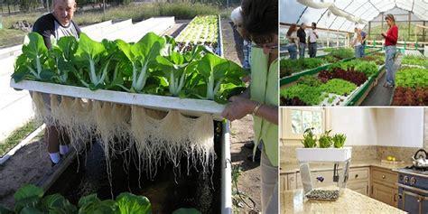 aquaponics system home design garden