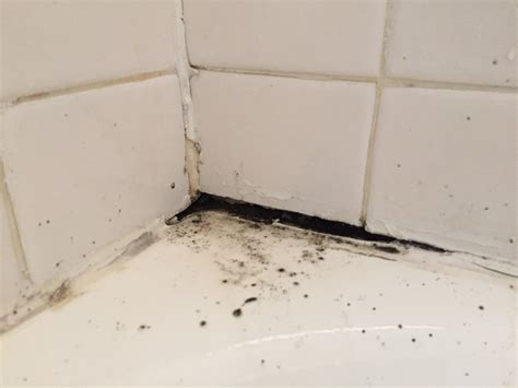 black mold on walls in bathroom the most effective methods to kill black mold naturally