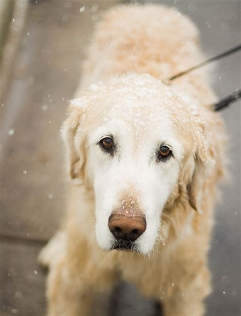 what temperature is cold for dogs walking your in cold temperatures south denver