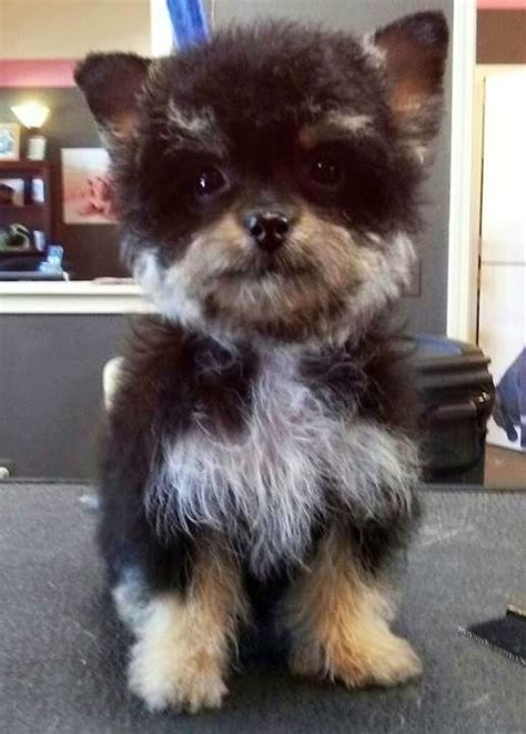 yorkie breeds mixes 20 adorable mixed breed dogs you ve probably never heard of weknowmemes