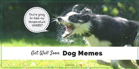 memes    smile    sick   dog friday